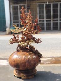 Bình Phú Quý Hoa Mai Gỗ Nu Hương Đắklak