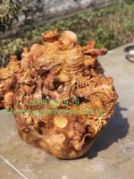 Tượng di đi lặc gỗ nu hương Mangyang Gia lai