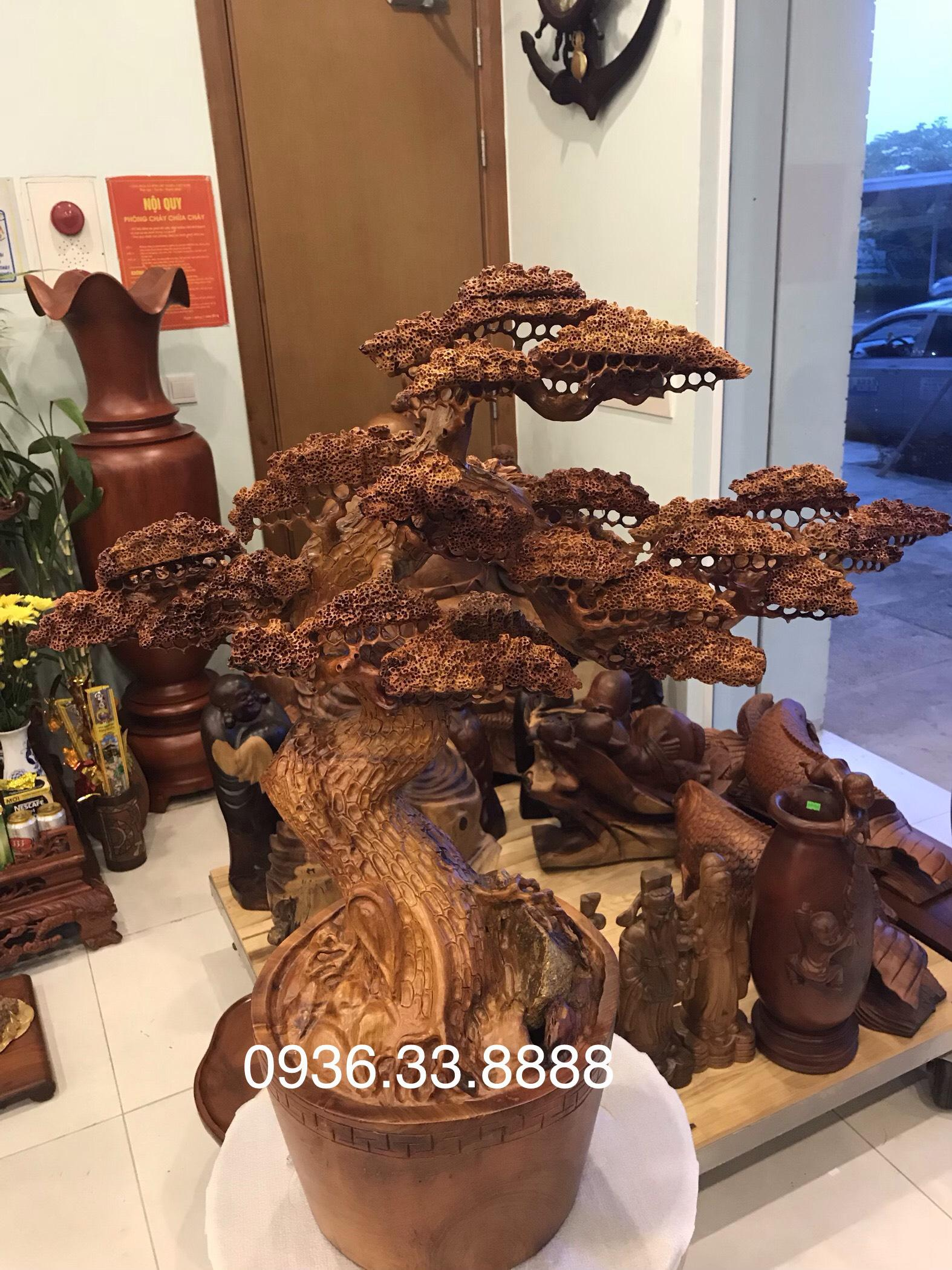Cây bon sai gỗ hương Gia Lai