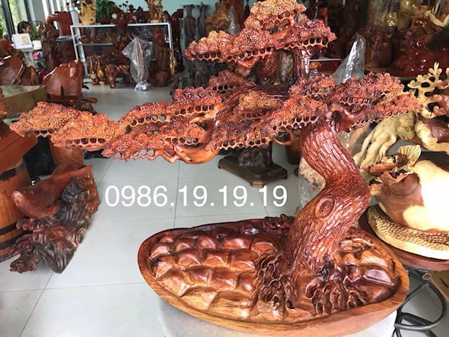 Cây Tùng Bon Sai dáng đô Gỗ Hương