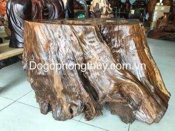 Đôn gốc gỗ Bách xanh